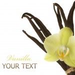Vanilla — Stock Photo #10684816