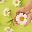 Hands With Chamomile Flower — Stock Photo #10684819