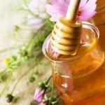 Honey — Стоковое фото