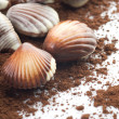 Chocolate Seashells Closeup — Stock Photo