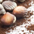 Chocolate Seashells Closeup - Stock Photo