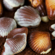 Swiss Chocolate Seashells Closeup - Stock Photo