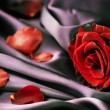 Red Rose And Silk — Foto de Stock