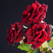 Beautiful Red Roses Bouquet over black — Stock Photo