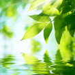 Stock Photo: Green Leaves.Nature background