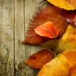Autumn Leaves over wooden background — Stock Photo