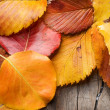 Autumn Leaves over wooden background — Stock Photo #10685776