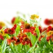 Summer Flowers Abstract Background — 图库照片