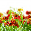 Summer Flowers Abstract Background — Stock Photo