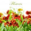 Stock Photo: Summer Flowers Abstract Background