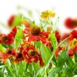 Summer Flowers Abstract Background — Stock Photo #10686083