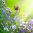 Butterflies On A Flowers - Stock Photo