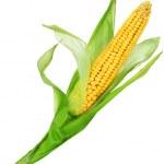 milho sobre branco — Foto Stock