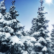 Winter Trees — Stockfoto #10687105