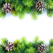 Christmas Fir Tree Border — 图库照片