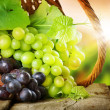 Stockfoto: Grapes In The Basket. Grapevine Over Vineyard Background