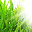 Stock Photo: Morning Grass