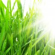 Morning Grass — Stock Photo