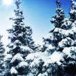 Winter trees - Stockfoto