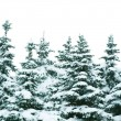 Winter trees — Stock Photo #10687542