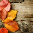 Autumn Leaves over wooden background. With copy space — Stock Photo #10687611