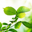 Leaves Outdoor — Stock Photo