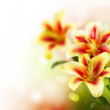 Lily Flowers border design.Spring Flowers — Stock Photo #10687753