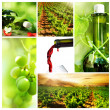 Wine. Beautiful Grapes Collage — Stock Photo