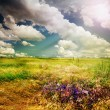 Beautiful Nature Rural Landscape — Stockfoto