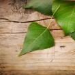 Green Leaves over Wood background — Stock Photo