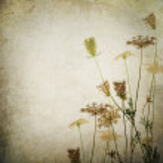 Vintage Floral Border — Stock Photo #10687957