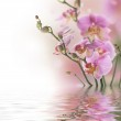 Beautiful Orchid With Reflection — Stock Photo #10688075