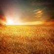 Golden Wheat Field And Sunset — Stock Photo #10688150