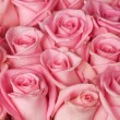 Roses Background — Stock Photo