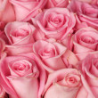 Roses Background - Stock Photo
