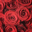 Red Roses Background - Foto Stock