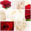 Beautiful Roses Collage - Zdjcie stockowe