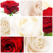 Beautiful Roses Collage - Stock Photo