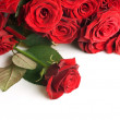 Red Roses Border - Stock Photo