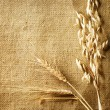 Wheat Ears on Burlap background. Country Style. With copy-space - Stock Photo