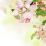 Spring Blossom Border — Stock Photo