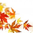 Stockfoto: Autumn Leaves over white