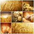 Wheat. Harvest Concepts. Cereal Collage - Stock Photo
