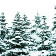 Winter trees — Stock Photo #10689029