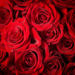 Red Roses background. Selective focus — Stock Photo