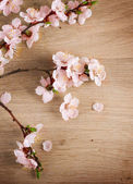 Spring Blossom Over Wooden Background — Stock Photo