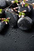 Zen spa kamienie i wiosna blossom — Zdjęcie stockowe