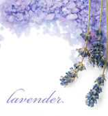 Lavender Spa Border. Isolated On White — Stock Photo