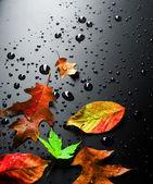 Wet Bright Autumn Leaves — Stock Photo
