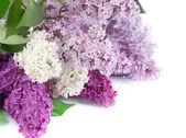 Beautiful Lilac Flowers Border — Stock Photo